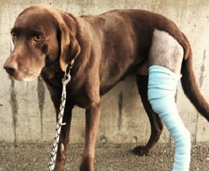 Tierversicherung Hund Katze FINA Finanzplanung